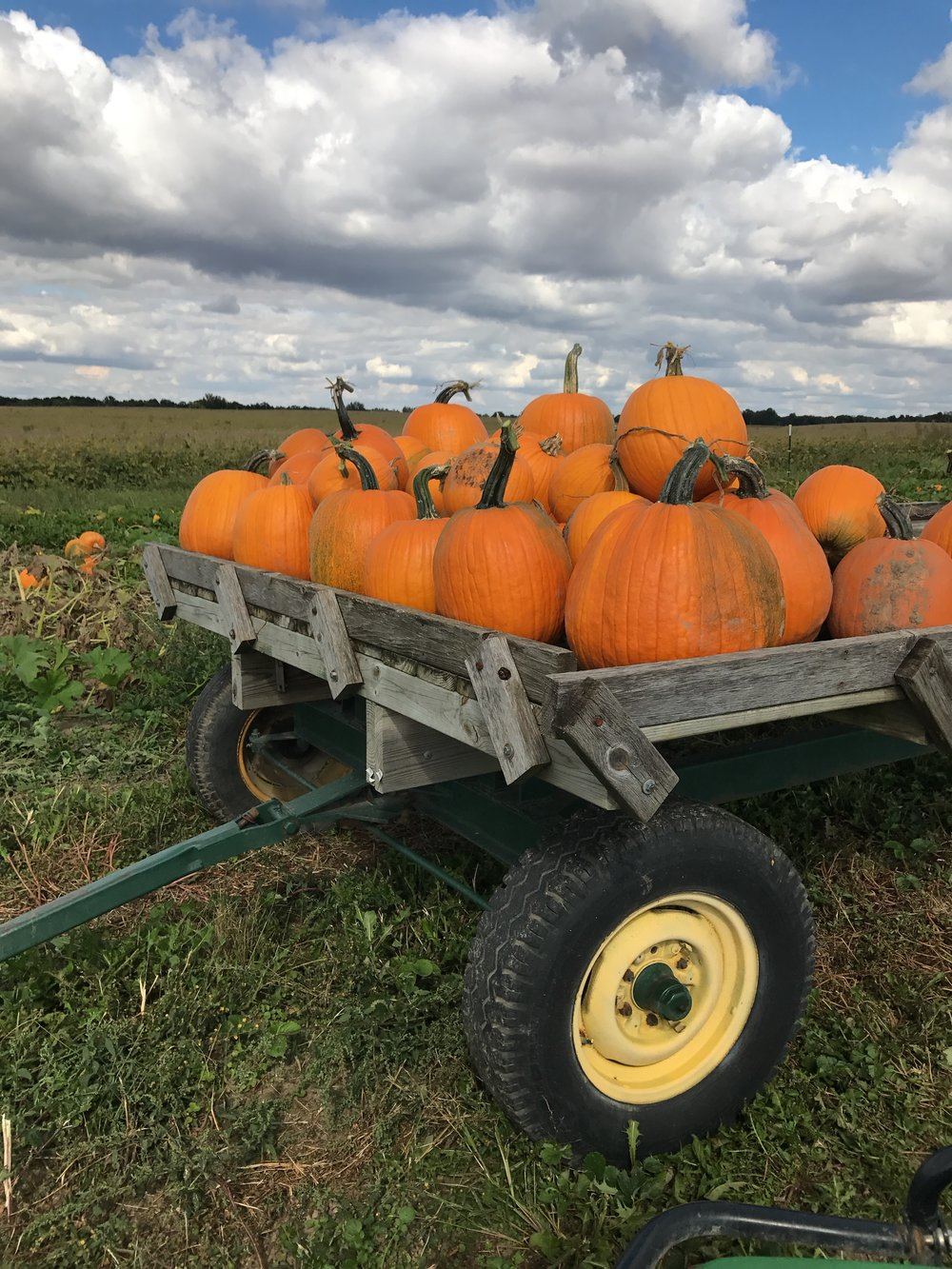 pumpkin, pick your own, u-pick, orchard, Indiana