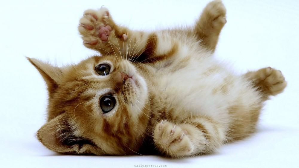 You don't want to see the Google images I found for that. Enjoy this picture of a playful kitten while I clear my search history.