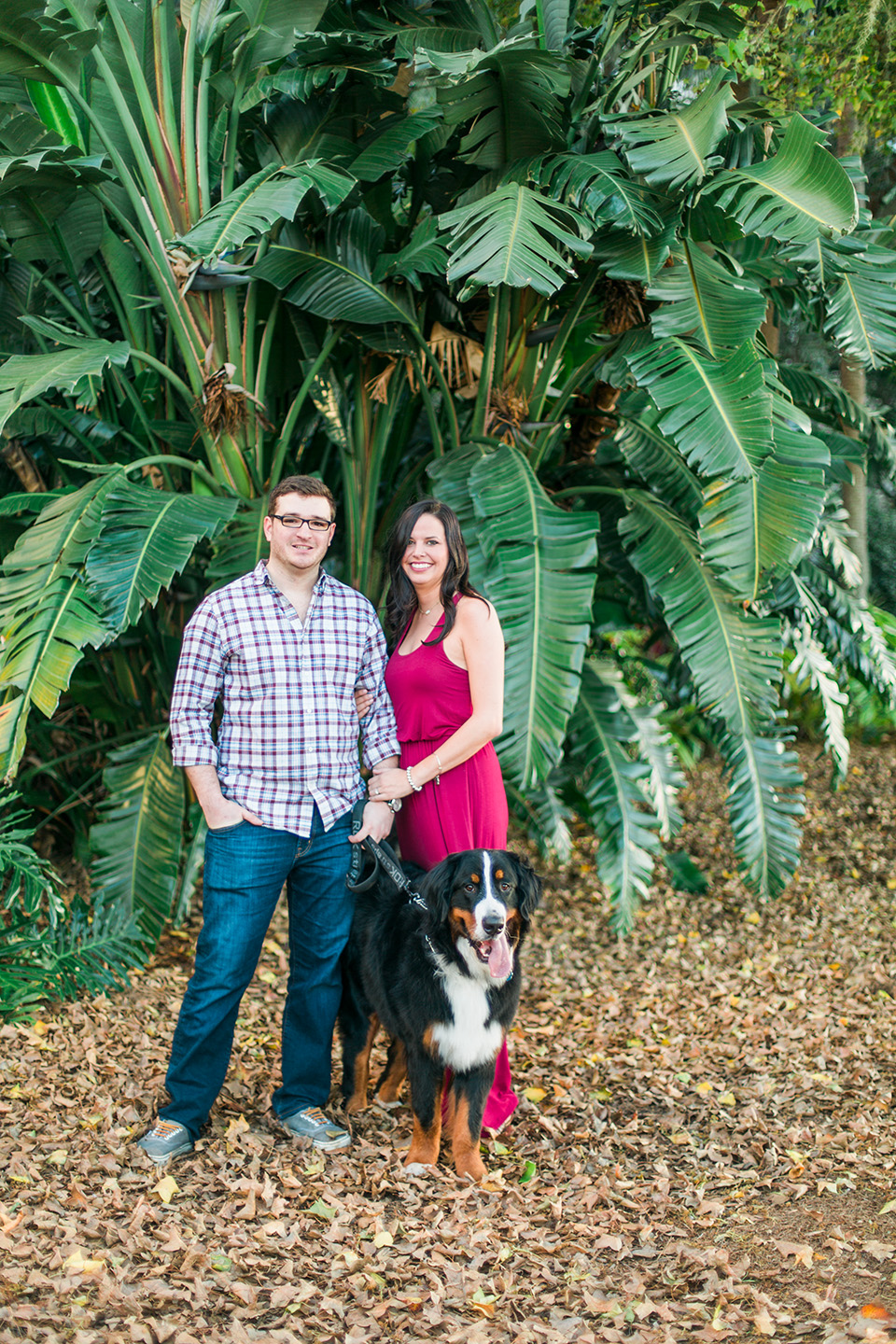 Picture of an engaged couple in downtown Orlando, Florida.  A Bernese Mountain dog is standing with them against tropical trees.