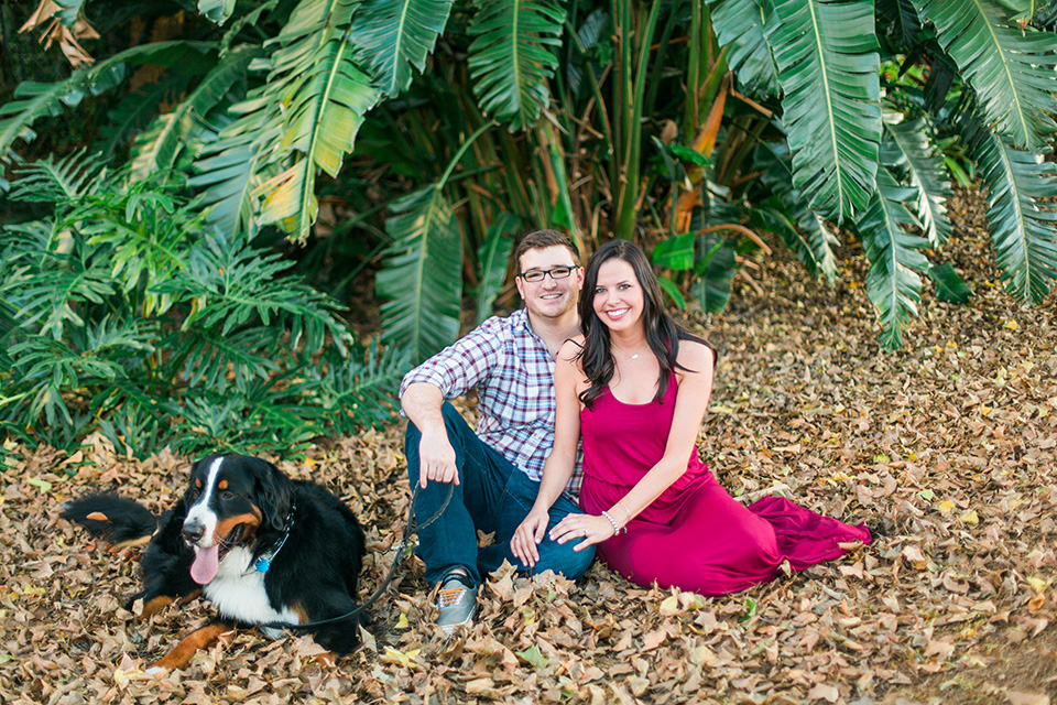 A picture of an engaged couple sitting together with their Bernese Mountain Dog in downtown Orlando, Florida.  There are tropical plants behind them.