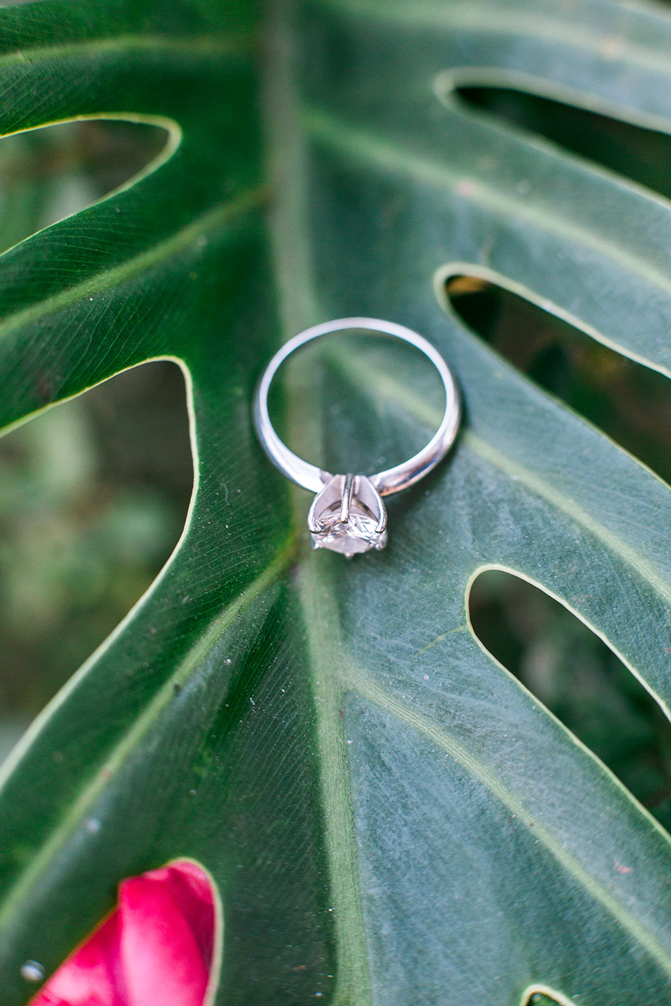 Picture of an engagement ring on a tropical leaf in downtown Orlando, Florida