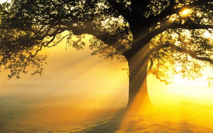 7019348-sunrise-morning-mist cropped copy.jpg