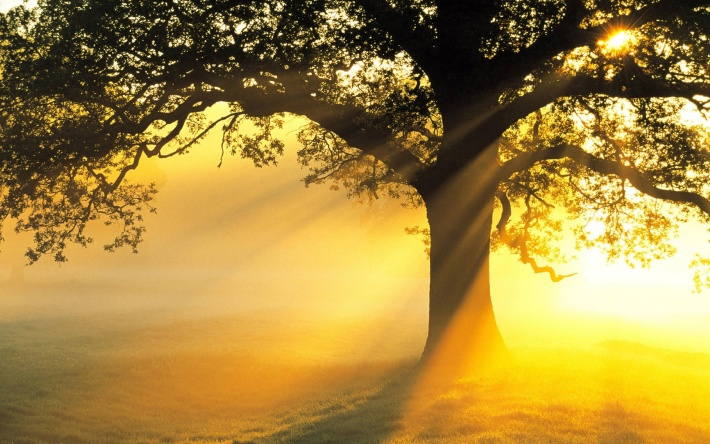bigpreview_Sun Tree copy.jpg
