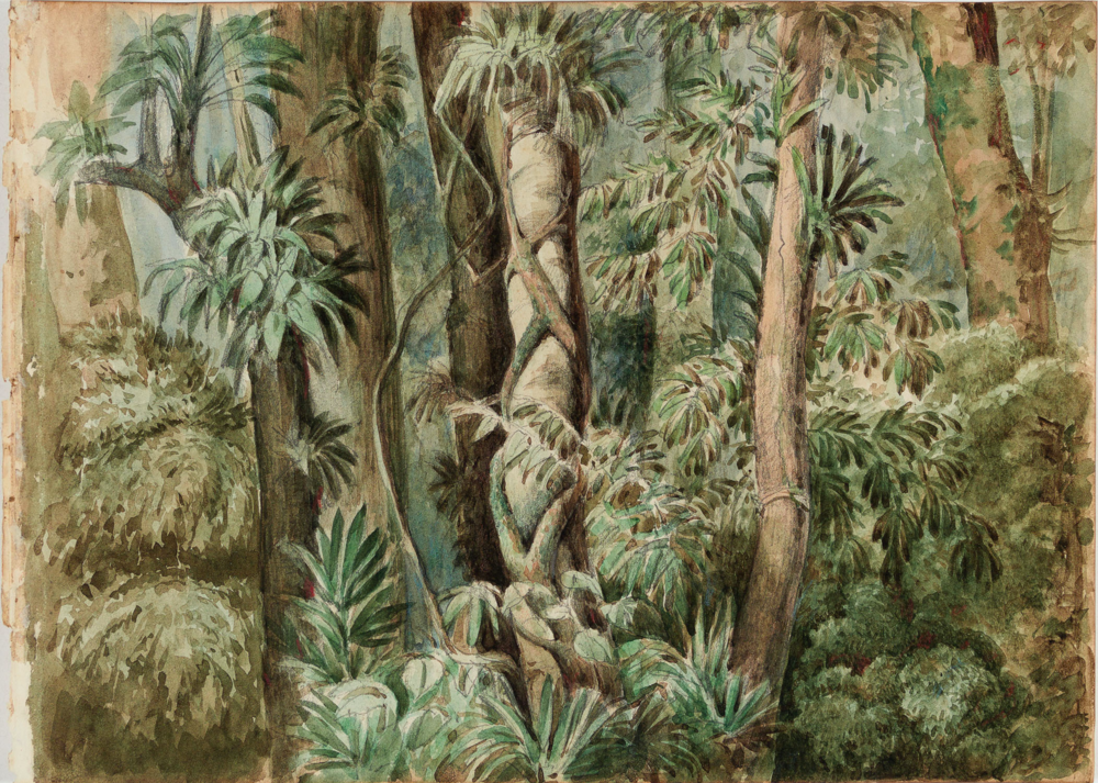 Brazilian Atlantic Forest