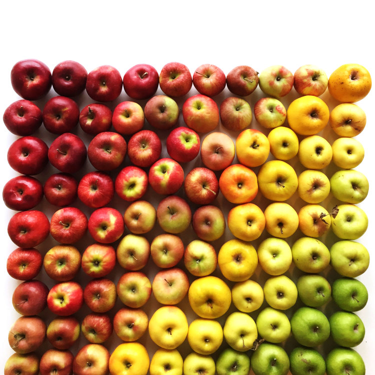 wright-kitchen-apples-gradient-goodfromyou.jpg