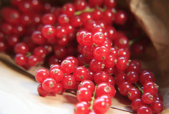 red_currants new.jpg