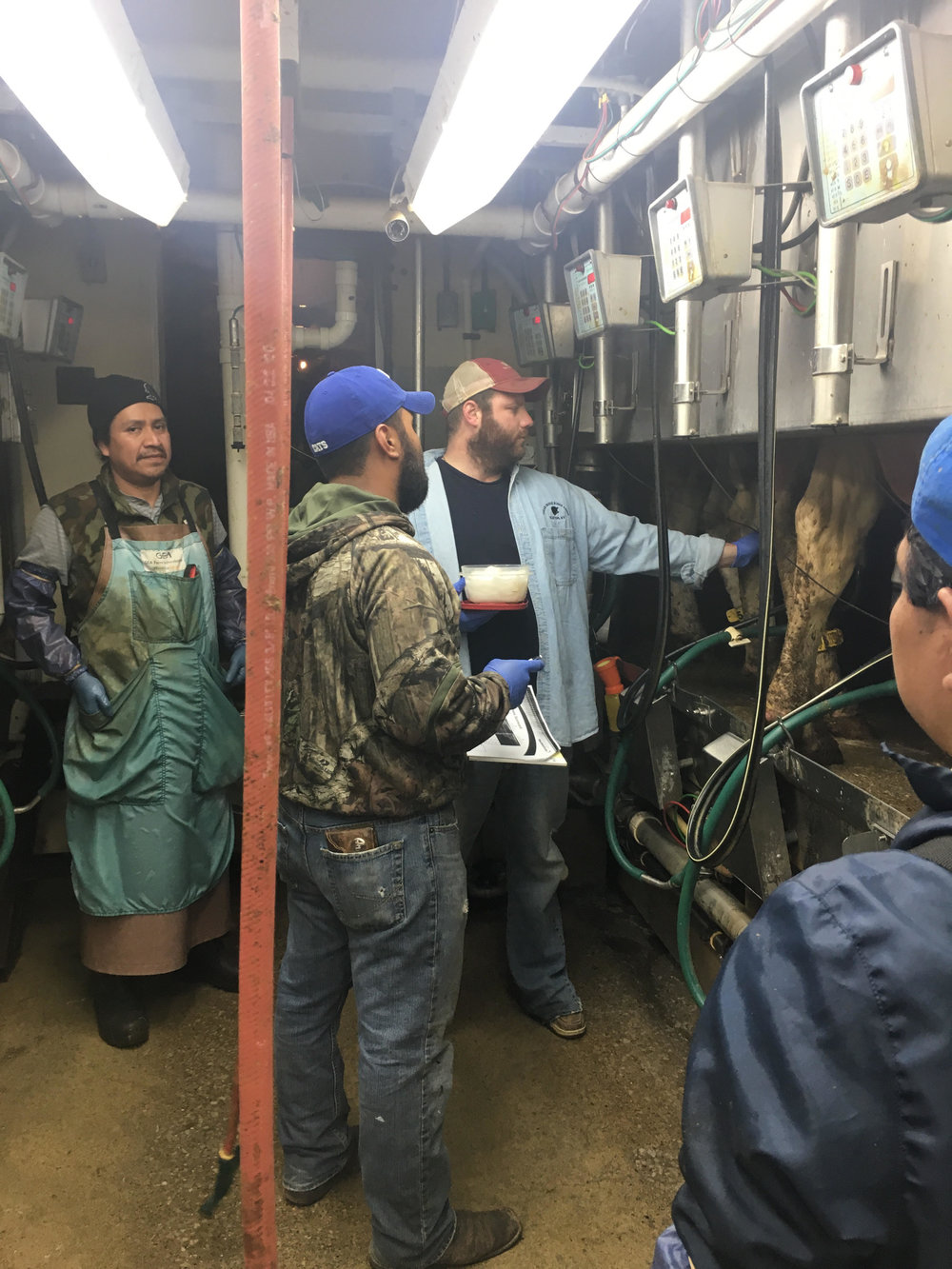 Late nights and early mornings are the norm for the people involved with our lab. Dr. John and Armando are teaching hispanic workers the tricks of the trade. Armando handles interpretation for us when working with dairies needing bilingual services.