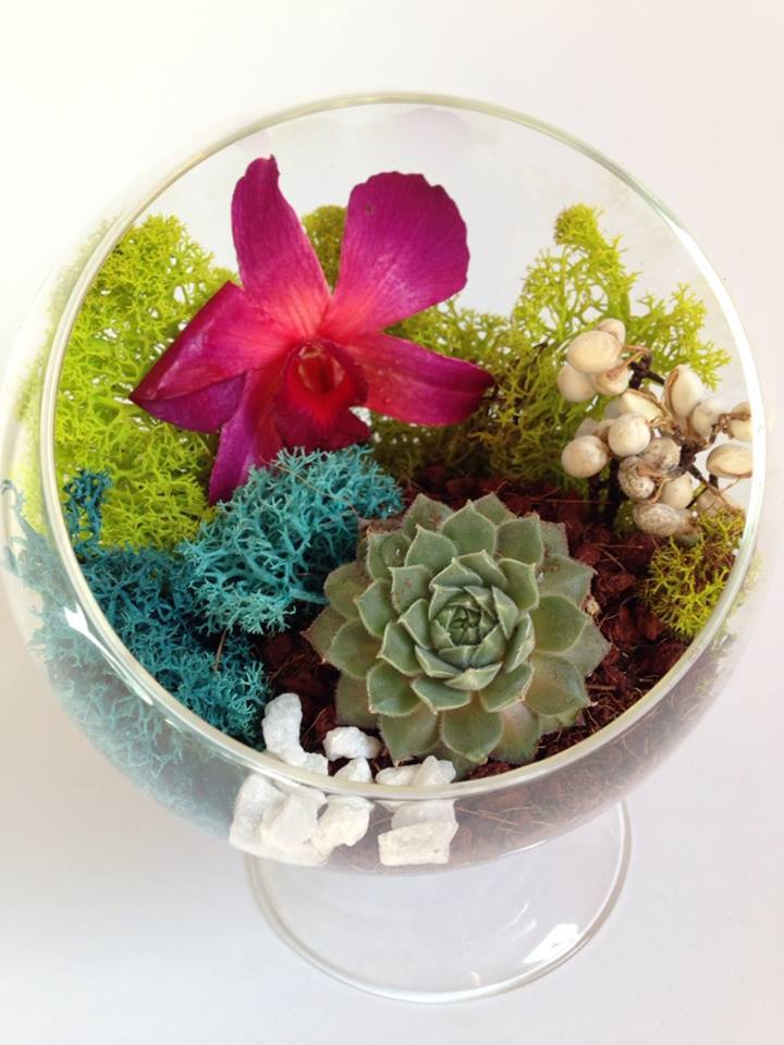 small succulent footed orb terrarium example.jpg