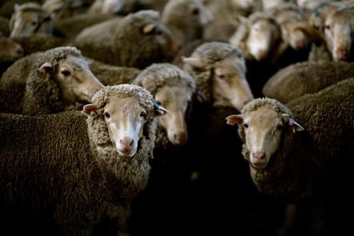 Armidale-Farm-Sydney-Australia-Zegna-2013-Dapper-Lou-Blog-Menswear+13.jpg