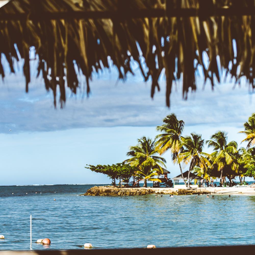 Paradiziac-Trinidad-and-Tobago-Dapper-Lou1.jpg