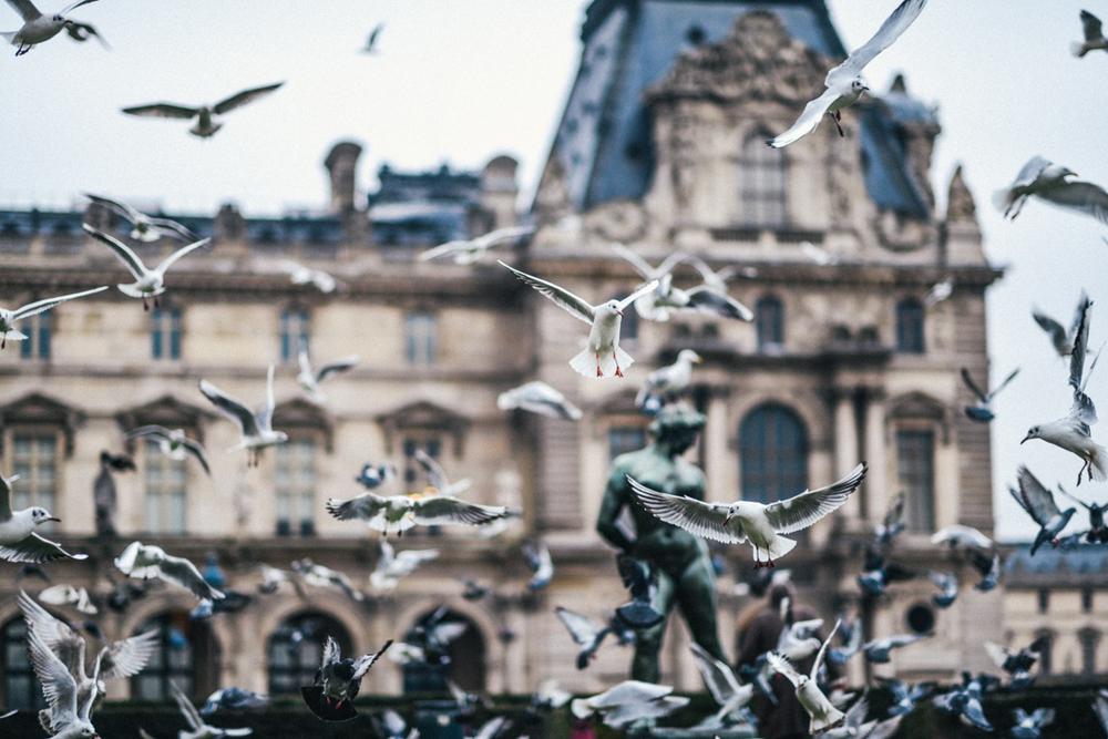 birds-paris-louvre-dapperlou (1 of 1)-3.jpg