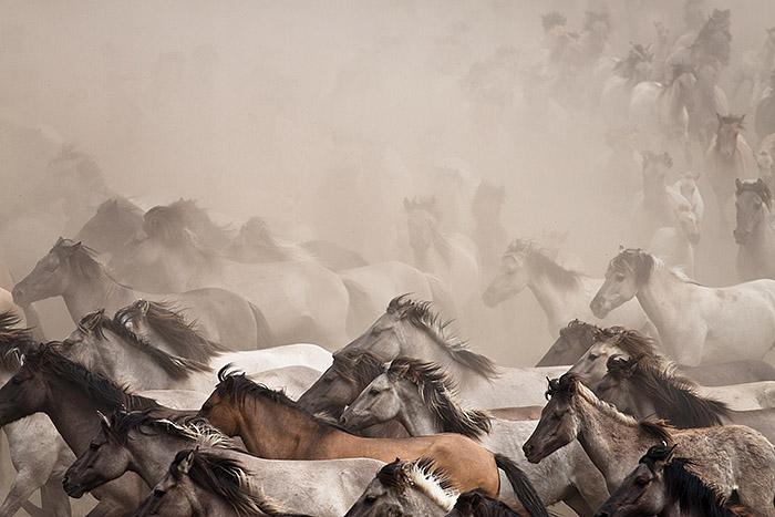 Wildpferde II.jpg
