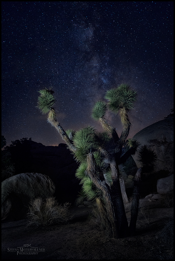 Joshua Tree at Nightrest