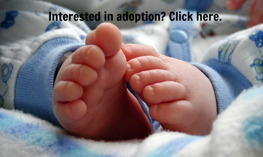 Want to adopt?