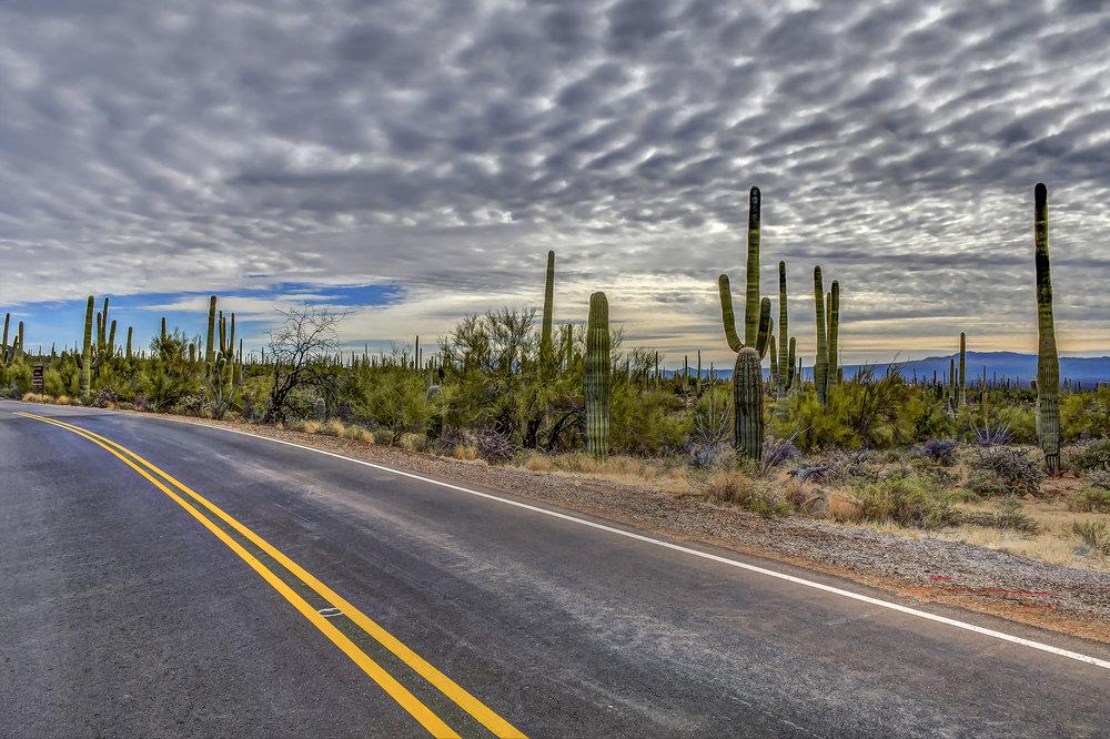 Saguaro_08.jpg