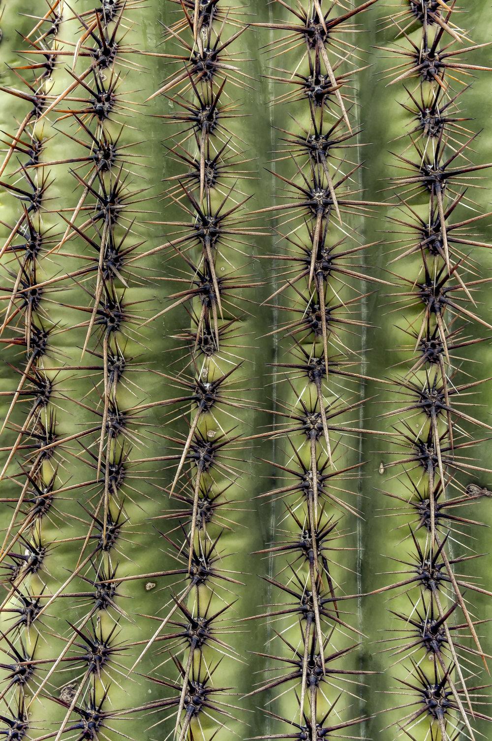 Saguaro_10.jpg