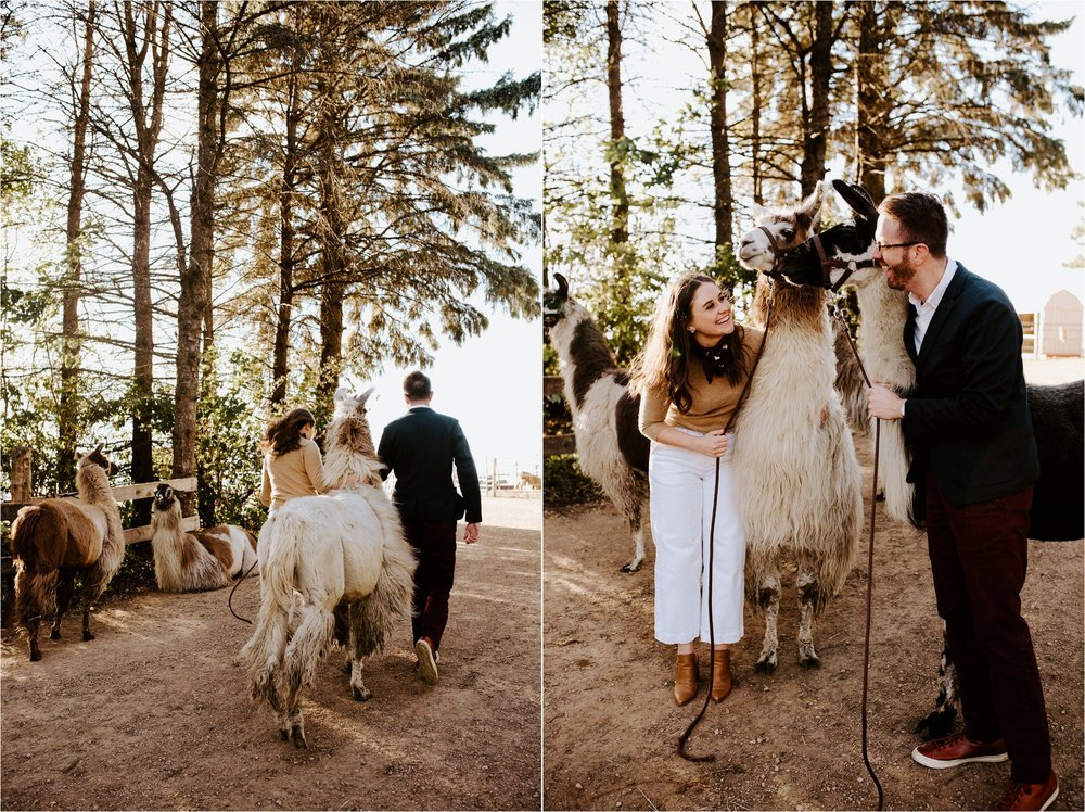 Carlson's Loveable Llamas Waconia Minnesota Engagement Session_3675.jpg