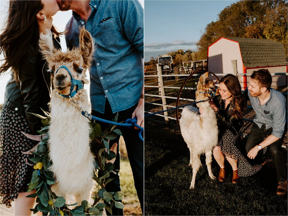 Carlson's Loveable Llamas Waconia Minnesota Engagement Session_3682.jpg