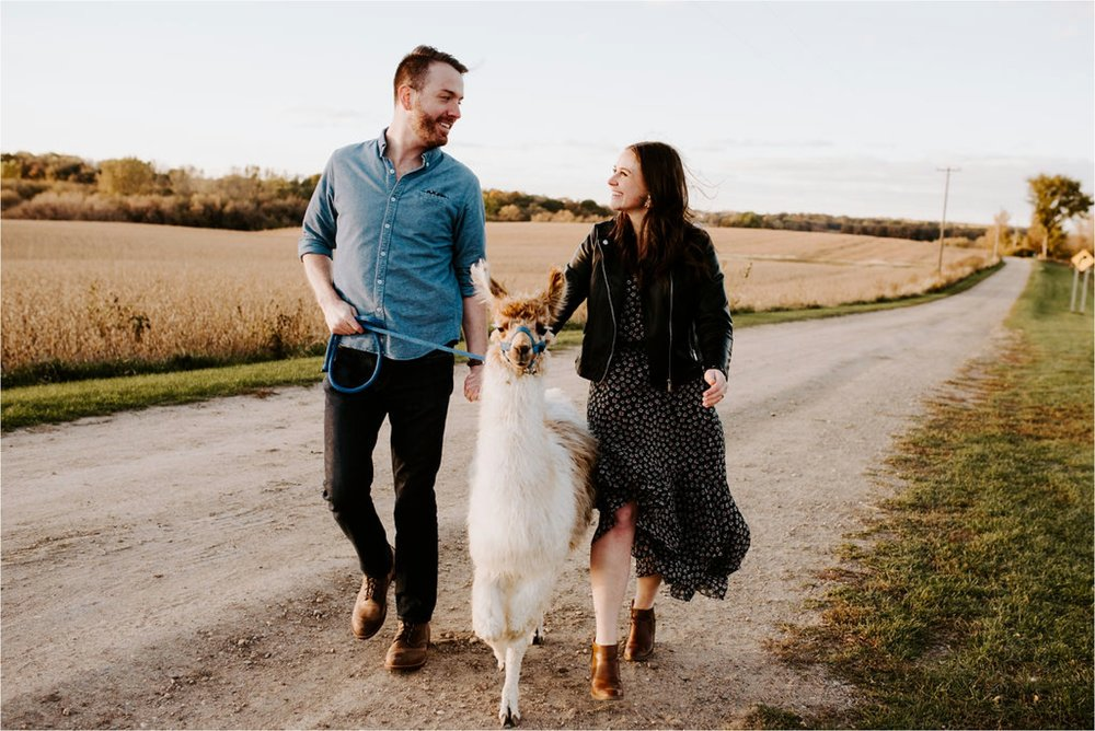 Carlson's Loveable Llamas Waconia Minnesota Engagement Session_3683.jpg