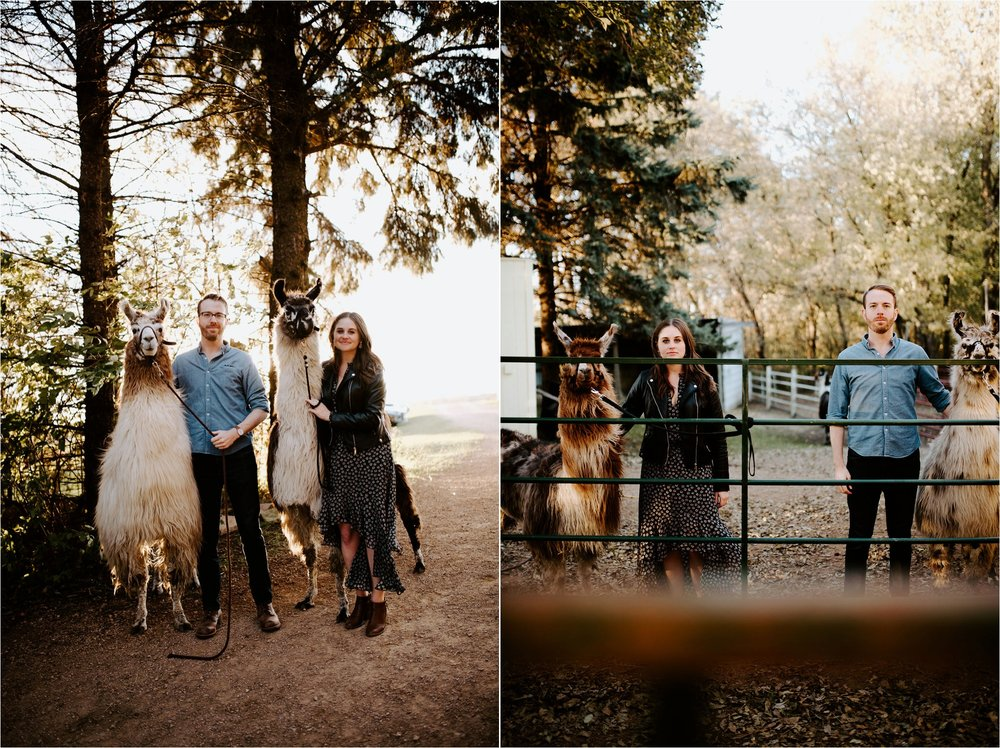 Carlson's Loveable Llamas Waconia Minnesota Engagement Session_3684.jpg