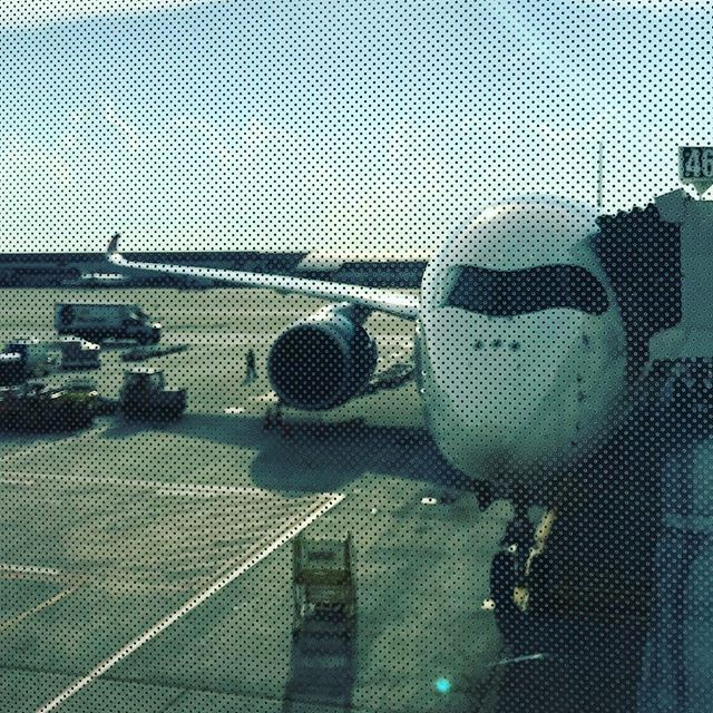 This black eyed bandit be taking me home. #airbus #a350-900