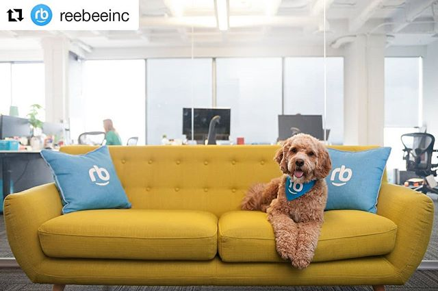Funny photoshoot at the reebee office helping them celebrate #nationalpetday. Photo by yours truly... . . . . . . . . . . #HashTags #PS #amazing #art #artistic #bestphoto #colorfull #colors #cool #instaphoto #instapic #instashot #ph #photo #photograph #photography #photooftheday #photos #photoshop #photoshot #photowall #picoftheday #kitchenerphotographer #huron #kwawesome
