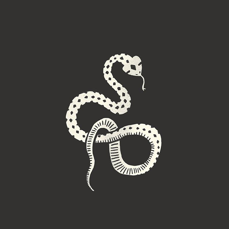 snake_web.jpg