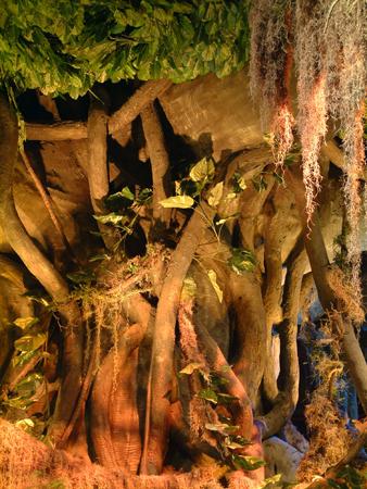 Monkey tree # 1 2401854087[K].JPG