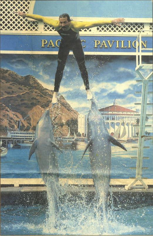 Boardwalk Dolphin Pavilion photo 3369492650[K].JPG