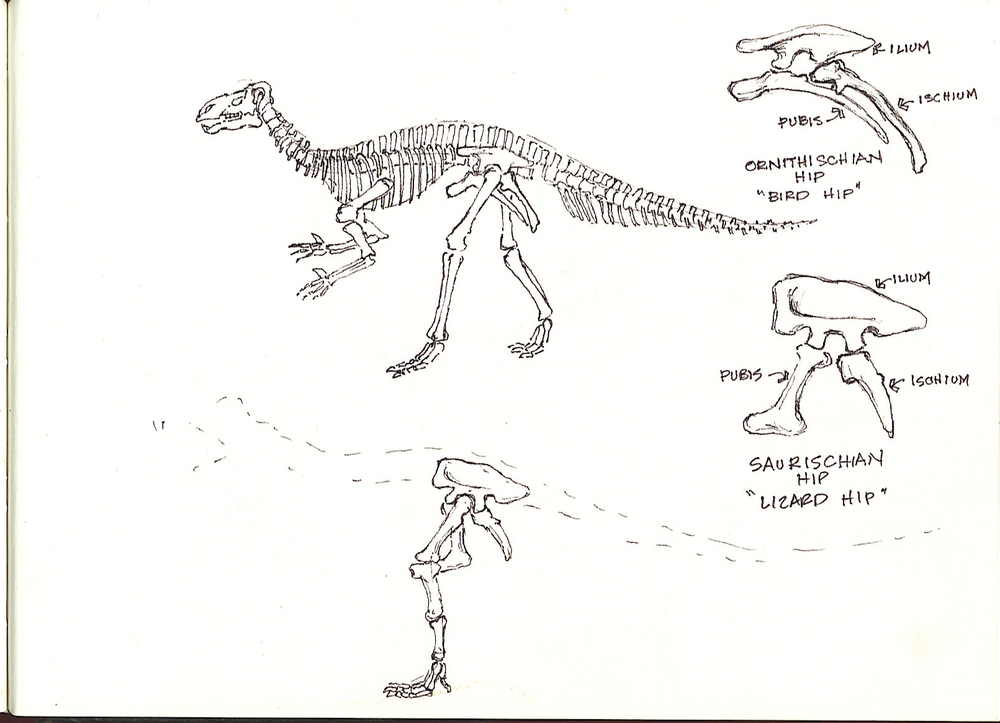 dinosaurs sketch2 2358444331[K].jpg