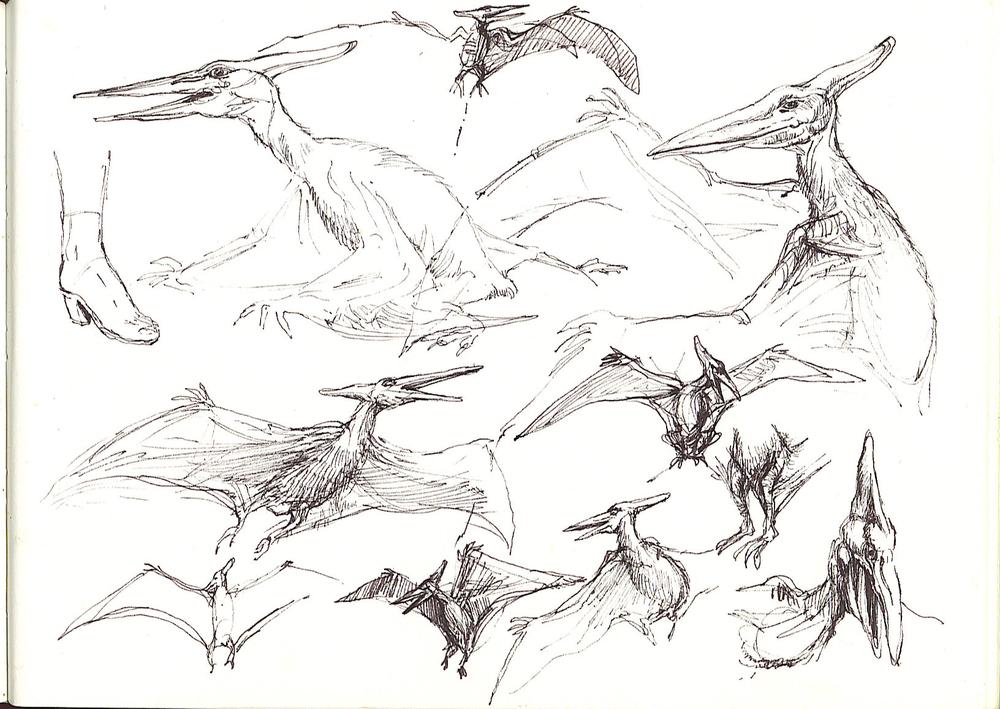 pterandon2 2359280202[K].jpg