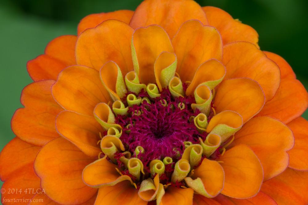 WILD! Flower