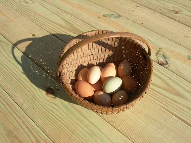 Most of my hens lay eggs in shades of brown, but a few lay blue or green eggs.