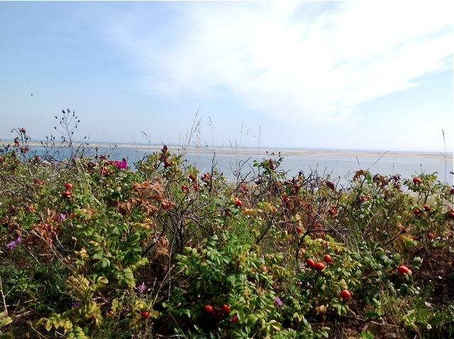 Sandbars visible in Chatham Bay during low tide.