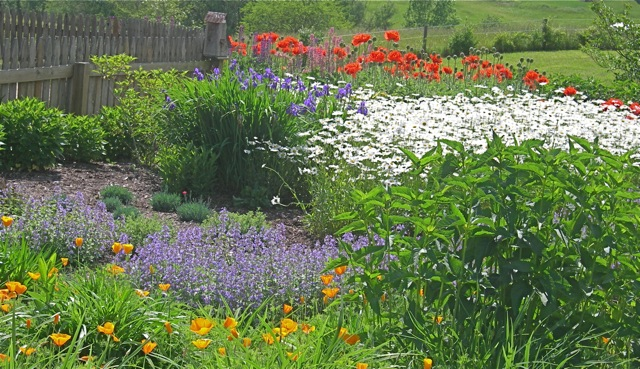 A colorful array of perennials.