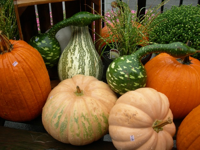 Gourds on sale at Butcher's Farm Market, Newport, PA
