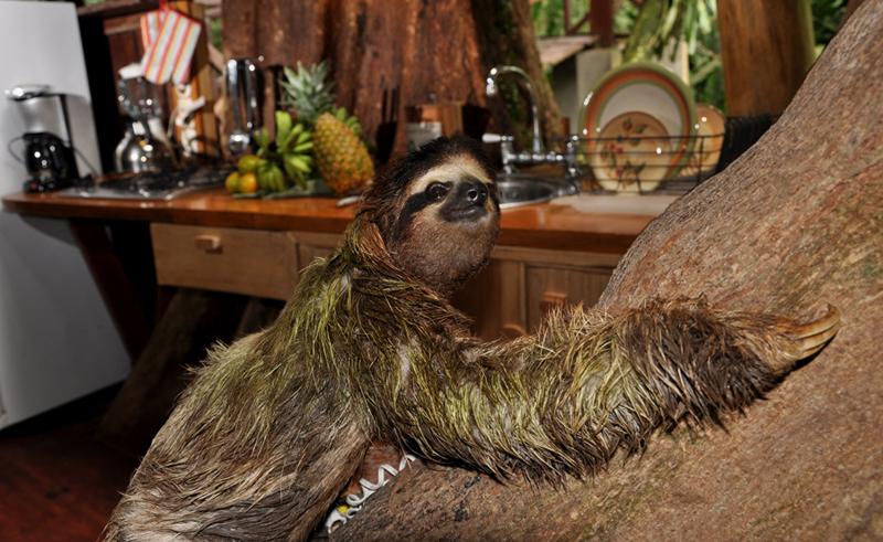 slothkitchen.jpg