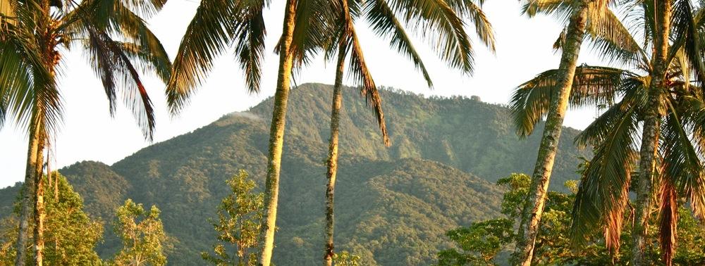 Mount Batukaru.jpg