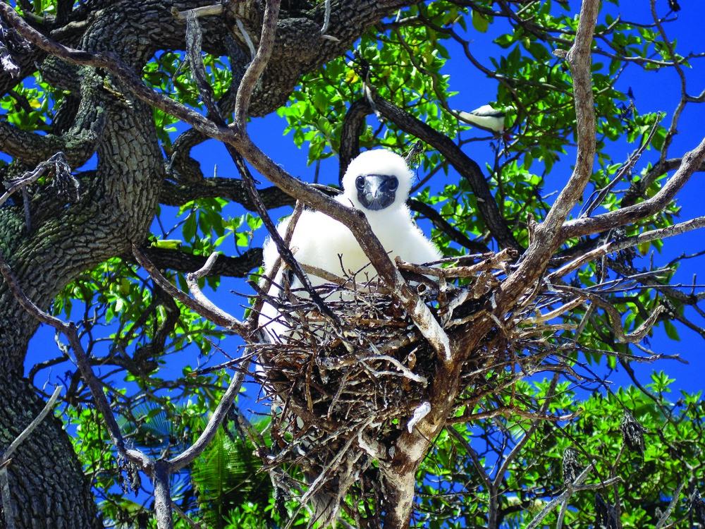 Bird_Nest_0691sm.jpg