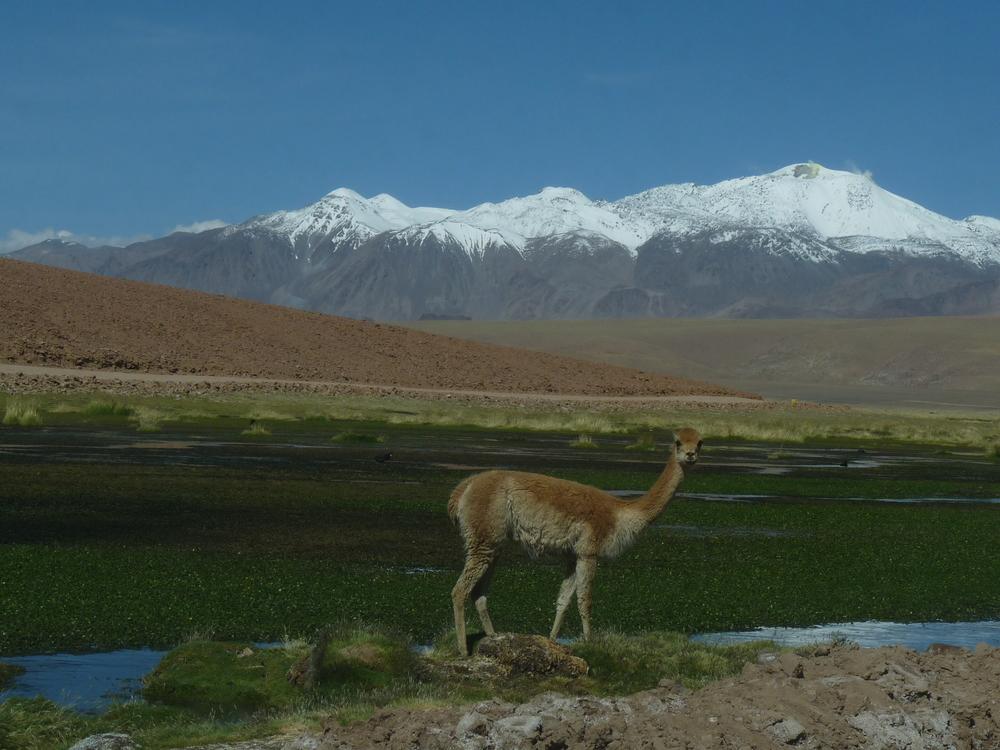 Awasi Atacama (49).JPG