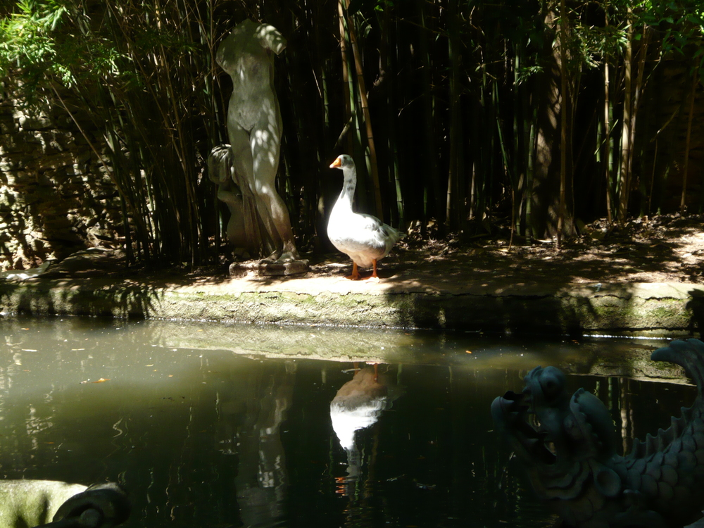 geese pond.JPG