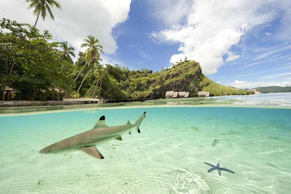 MER.Tobias.Zimmer.Shark.Lagoon.jpg