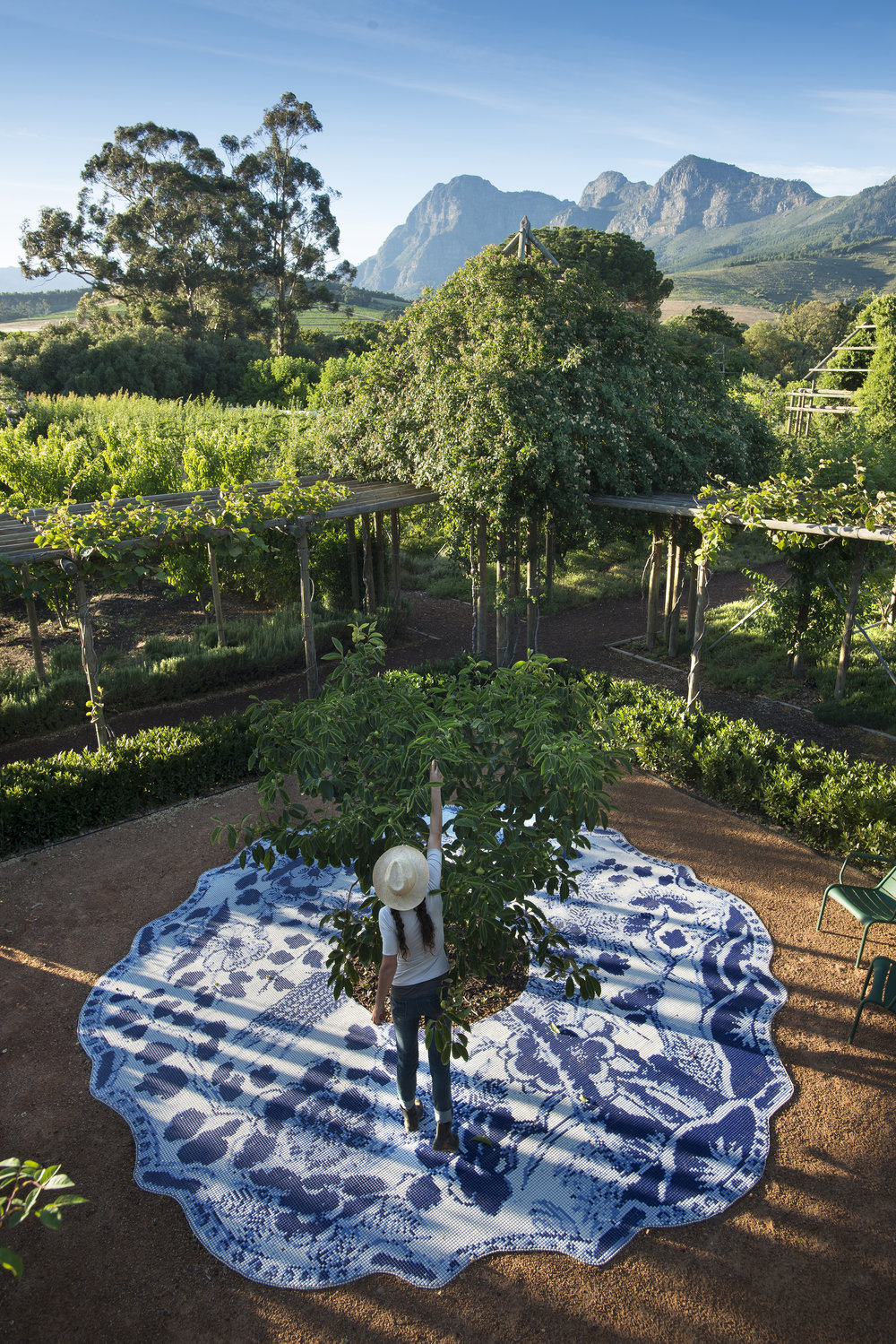 19.Persimmon tree framed by delft mosaic, Simonsberg looking on.jpg