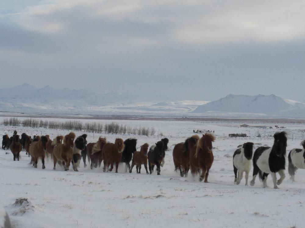 Horses_Winter.JPG