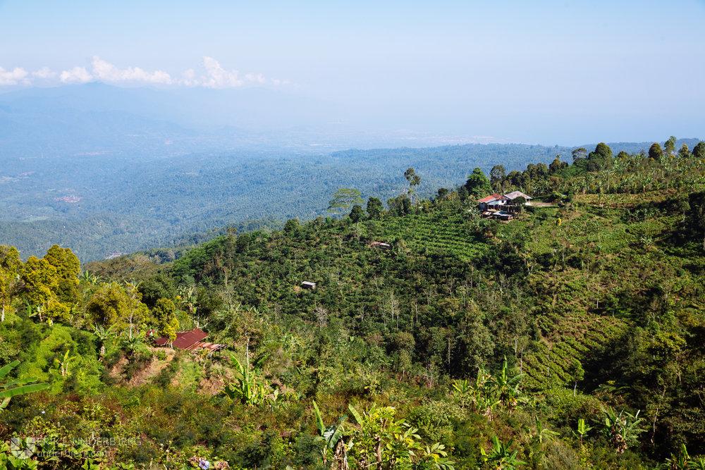 Photo property of Munduk Moding Plantation