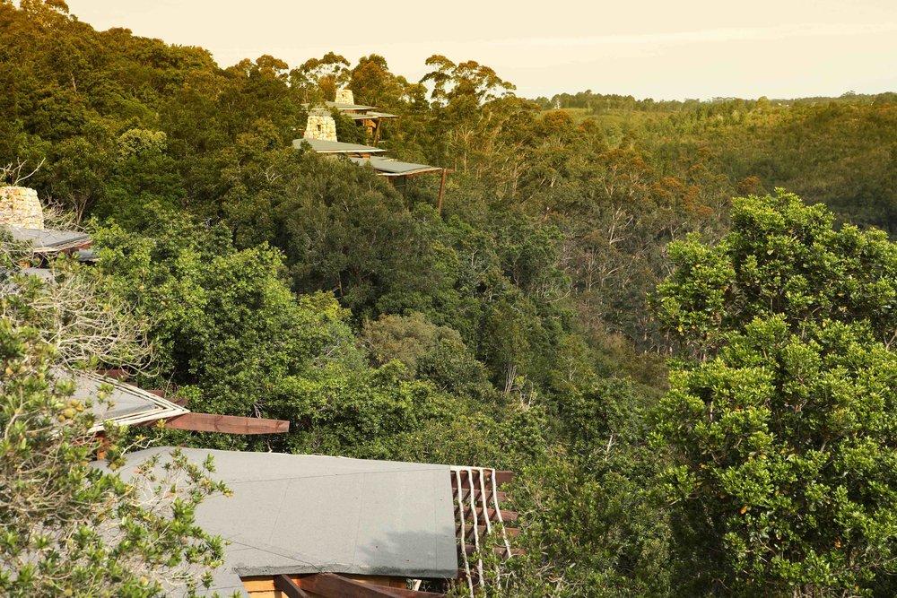 Tsala - Forest View.jpg
