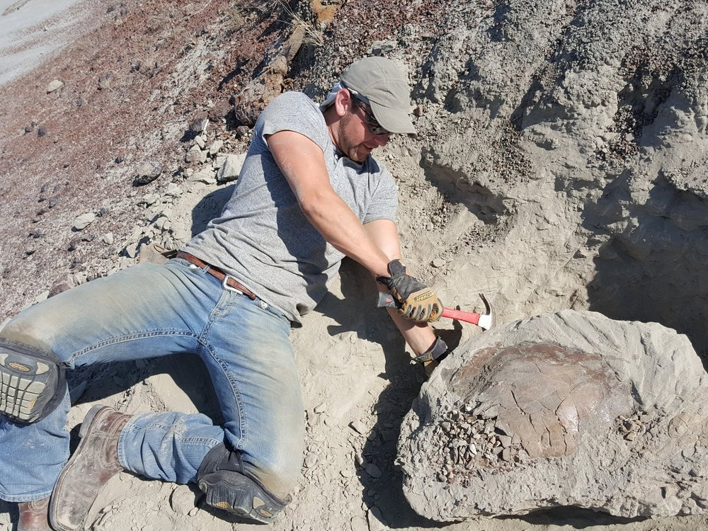James Reed: Field Director/Owner I'm a Geologist currently working in South Dakota. In addition to dinosaurs, i study stratigraphy, (the sequences of rock layers). During my undergrad i did stratigraphic research on ejecta layers from the 2nd largest impact crater on Earth. I'm continuing research in stratigraphy, as well as assisting students with their own on the K-Pg boundary in the Hell Creek Formation.                          Email: hcfossils@gmail.com   Phone: (507) 313-6954