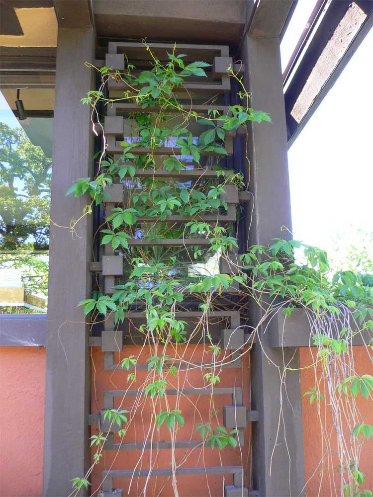 Frames support climbing plants.