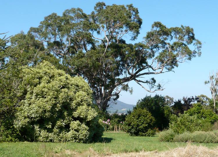 Big ass trees: the city gardener's dream.