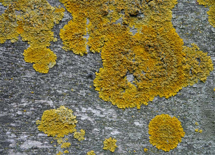 A lichen shot - quelle surprise! At least I'm consistent.